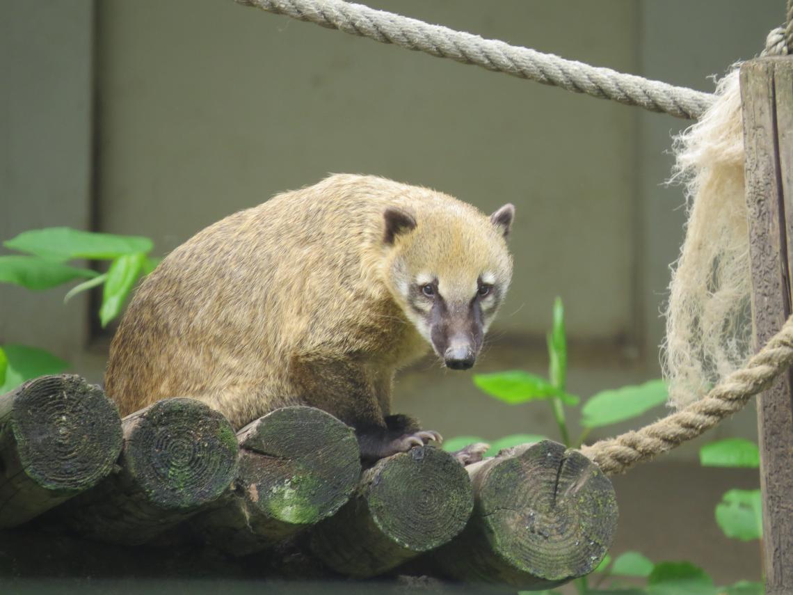 Uitstap Zoo
