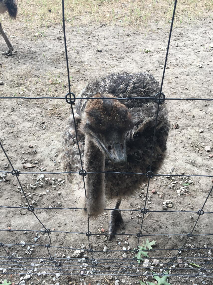 Uitstap Struisvogelnest
