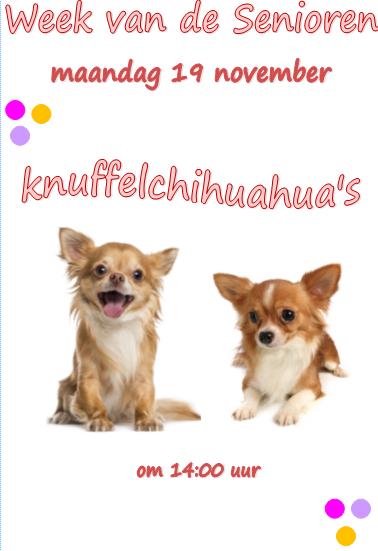 Wvds 19 nov - Knuffelchihuahua's