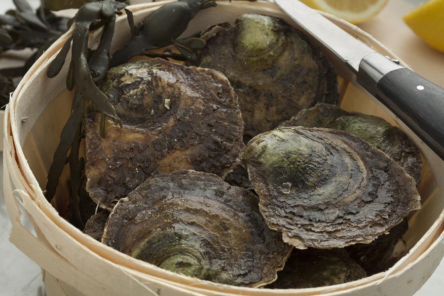Proef onze heerlijke oesters