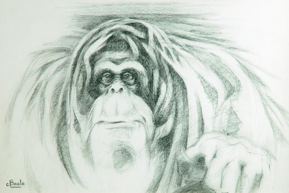Stan Baele (kunstschilder) - Orang-Oetan