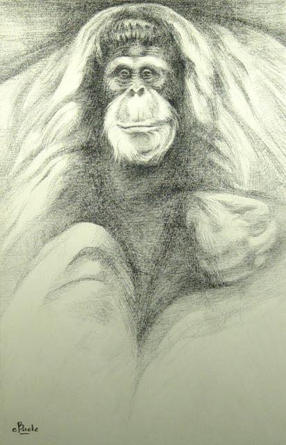 Stan Baele (kunstschilder) - Orang Oetan