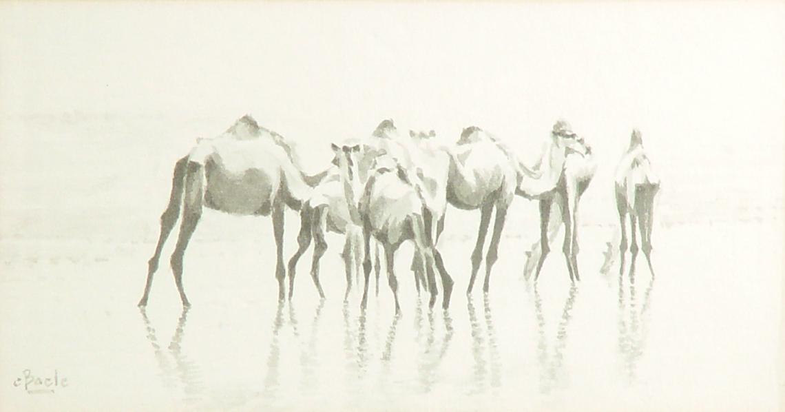 Stan Baele (kunstschilder) - Drinkende Kamelen