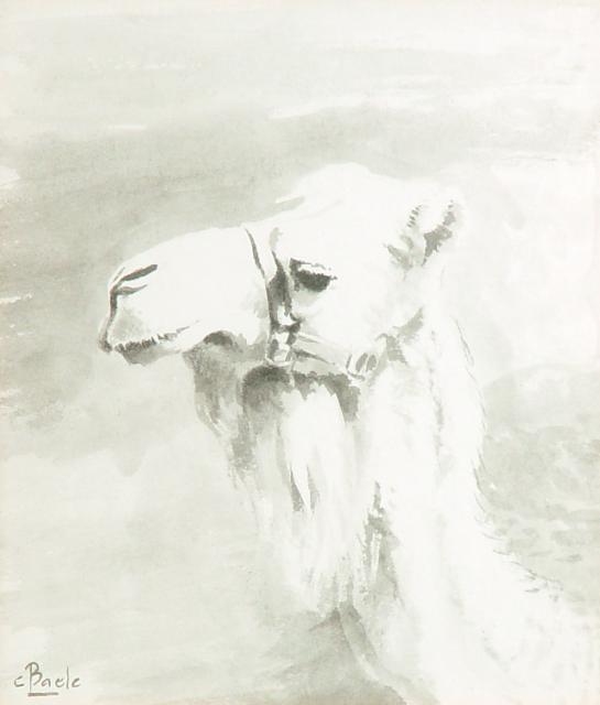 Stan Baele (kunstschilder) - Kameel