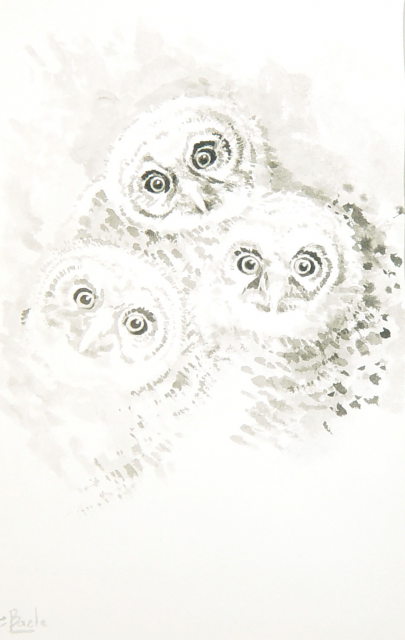 Drie Jonge Uiltjes