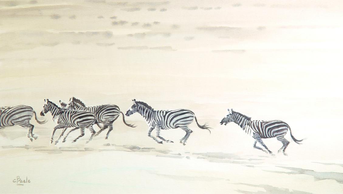 Zebra's (De Laatste)