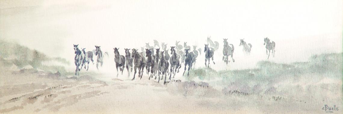 Paarden in Gallop