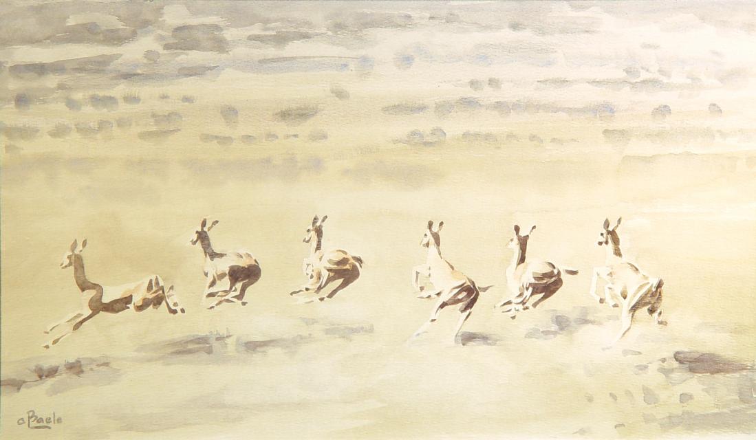 Vluchtende Antilopen