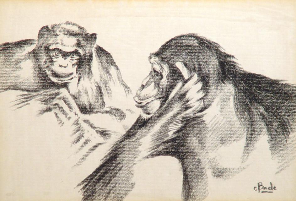 Stan Baele (kunstschilder) - Chimpansees