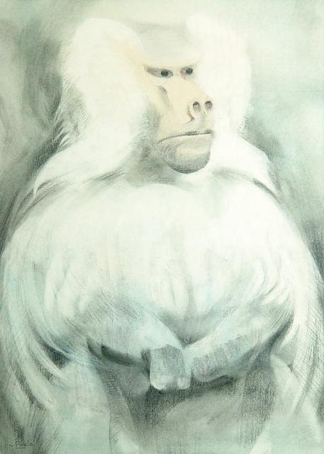 Stan Baele (kunstschilder) - Mantelbaviaan