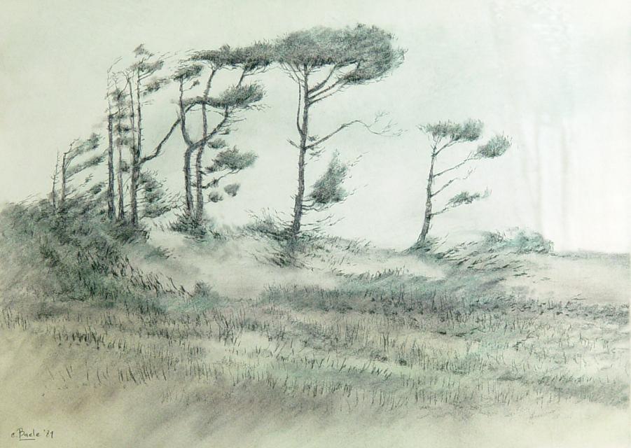 Stan Baele (kunstschilder) - Oude Dennen in Stuifzand