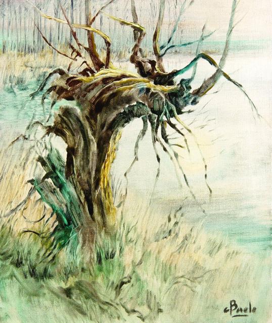 Stan Baele (kunstschilder) - Knotwilg